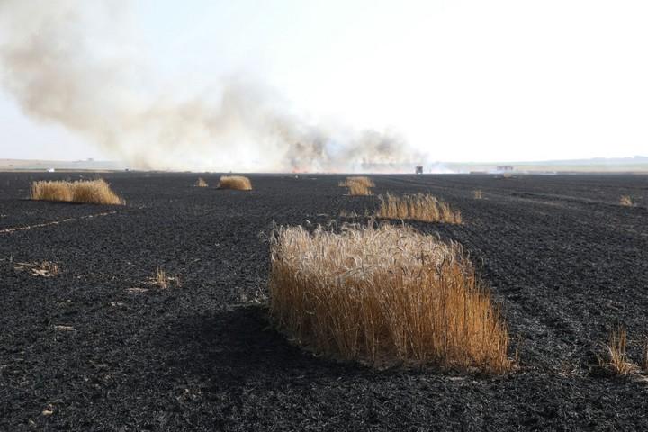 שדה שרוף ליד ניר עוז. השדה הוצת על ידי עפיפון שהועף מעזה (אורן זיו / אקטיבסטילס)