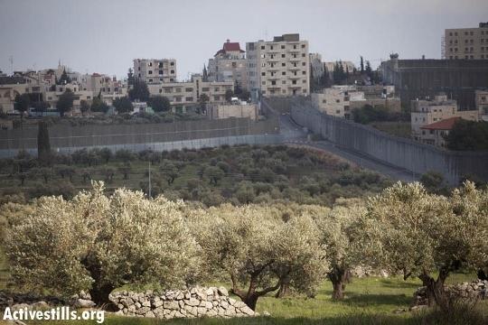 החומה יוצרת מובלעת כביש בלב בית לחם אל קבר רחל (אורן זיו / אקטיבסטילס)