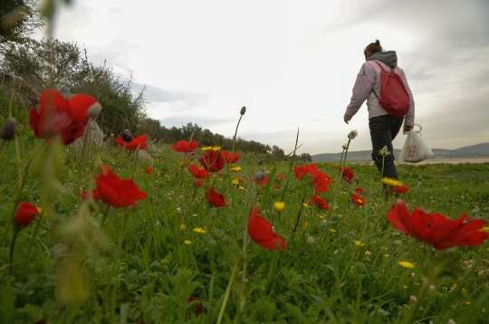 יש פרחים שבני חלוף הם (צילום: בסאם אלמוהור)