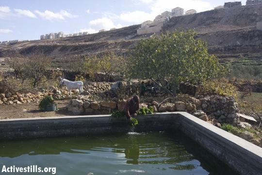 חקלאי  בוואדי פוכין עם אחד ממעיינות הכפר (אורן זיו / אקטיבסטילס)