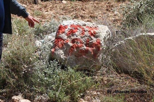 צילום: ע'אלב נג'אג'רה