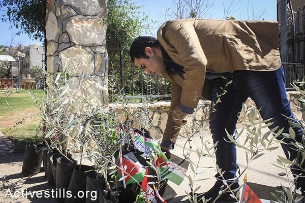 מתנדבים פלסטינים מתכוננים לקראת פעילות של חלוקת עצי זיתים למשפחות של אסירים פלסטינים, בכפר בייתא, הגדה המערבית, ה-1 למאי, 2014. (אחמד אל-באז/אקטיבסטילס)