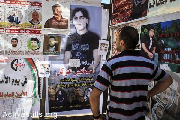 פלסטיני מסתכל על תמונות של אסירים התלויות בתוך אוהל מחאה שהוקם בסולידריות עם עצירים מנהליים שובתי רעב, שכם, הגדה המערבית, ה-2 למאי, 2014. (אחמד אל-באז/אקטיבסטילס)