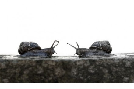 Snail Love by Adam Foster (CC BY-NC-ND 2.0)