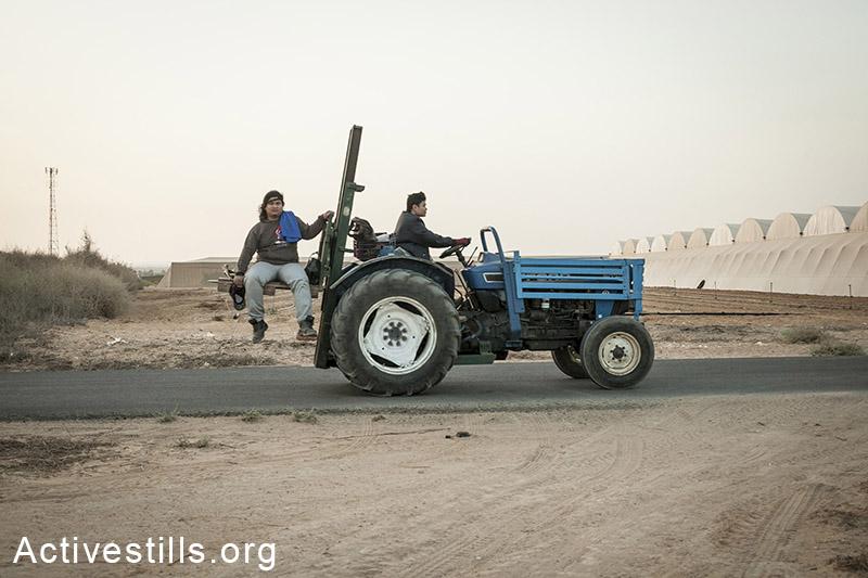 מושב שדה ניצן, אוקטובר 2013.עובדי חקלאות בדרכם לעבודה. (שירז גרינבאום/אקטיבסטילס)
