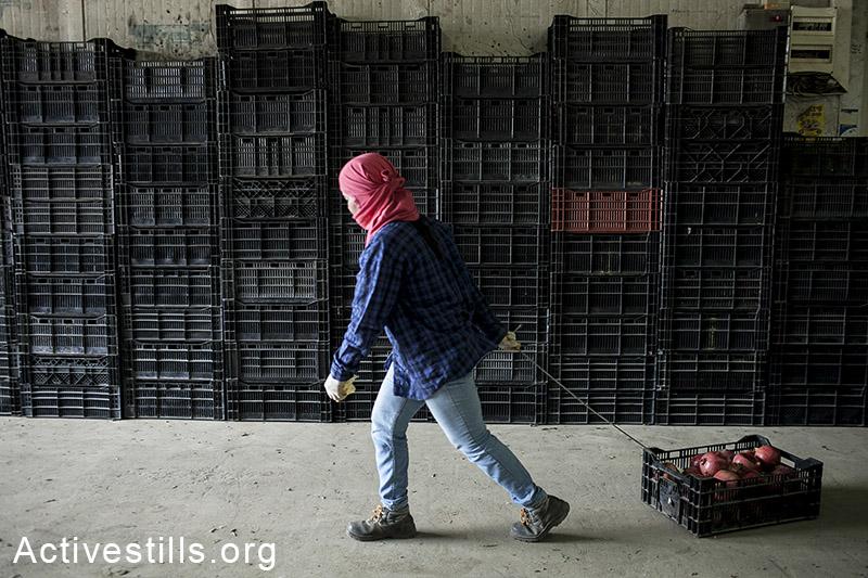 מושב שדה ניצן שבנגב, אוקטובר 2013.עובדת חקלאות נושאת ארגז רימונים. השכר הממוצע בשדה ניצן עומד על כ-17.5 שקלים לשעה, עבור כשמונה עד XXX שעות עבודה ביום, ללא תוספת משכורת עבור שעות נוספות. לאחר שביתה שקיימו העובדים הסכימו בעלי המשקים להעלות את השכר למשכורת יומית של כ-130 שקלים. (שירז גרינבאום/אקטיבסטילס)