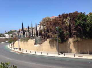 עצי הדקל השרופים. צילום: מיכאל רועה