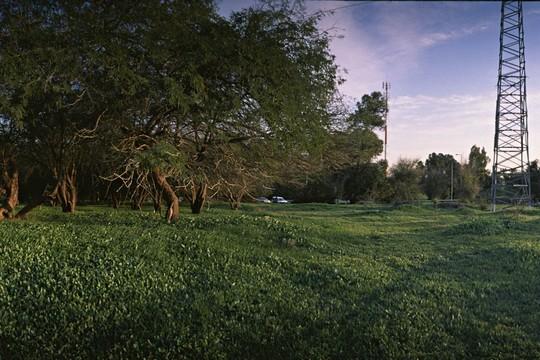 החורשה על חורבות 'בריר'. (צילום: אל פלנדרס וטמירה סוונצקי אתר 'זוכרות').