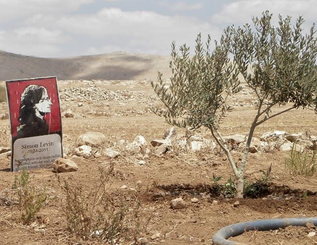 באחד הכפרים נטעו חורשת עצי זית קטנה לזכר סיימון לוין, פעיל אנגלי-יהודי שהתנדב בכפר וסייע להם רבות (נירית חביב)