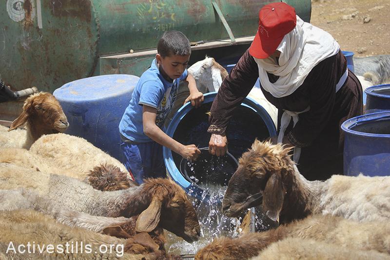 משפחה פלסטינית משקה את עדר הכבשים שלה, סאמרה, בקעת הירדן, הגדה המערבית, 30 במאי, 2012. אחמד אל-באז/אקטיבסטילס