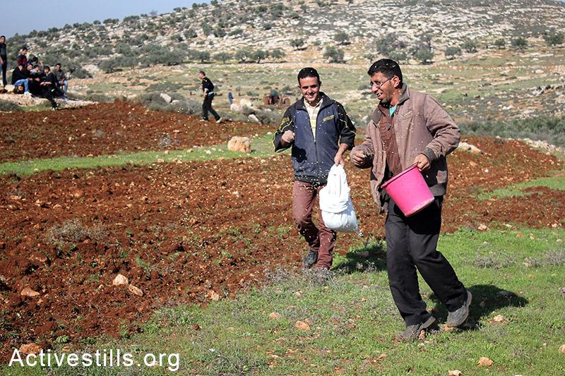 חקלאים פלסטינים זורעים את האדמה במהלך פעולה ישירה, הכפר סלמה, הגדה המערבית, 5 דצמבר, 2014. אחמד אל-באזז/אקטיבסטילס