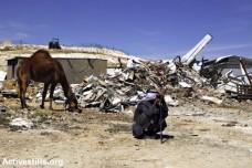 תושב הכפר הבדואי הבלתי מוכר ואדי אל-נעם יושב ליד הריסות ביתו, 18.05.2014 (מרייקה לאוקן/אקטיבסטילס)