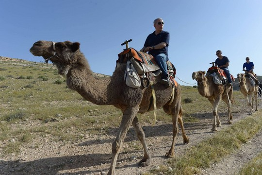 """בנימין נתניהו מוביל שיירת גמלים (עמוס בן גרשום, לע""""מ)"""