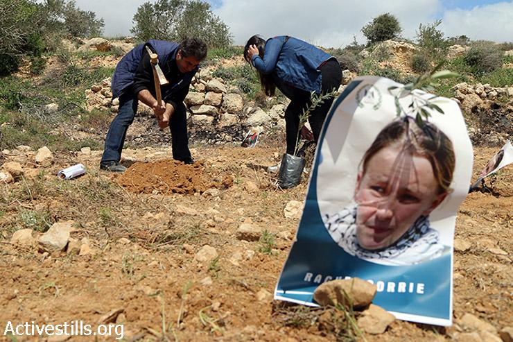 פעילים פלסטינים שותלים עץ זית סמוך לתמונתה של רייצ'ל קורי במהלך יום נטיעות לזכרה של קורי סמוך לכפר קריות, 15 במרץ, 2015. קורי הייתה פעילה אמריקאית אשר נדרסה ע״י בולדוזר צבאי בזמן שניסתה לחסום בגופה הריסת בית פלסטיני באזור רפיח, עזה, ב- 2003.(אקטיבסטילס)