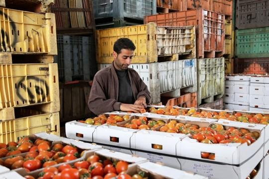 """שיווק חקלאי מעזה לישראל (צילום באדיבות ארגון """"גישה"""")"""