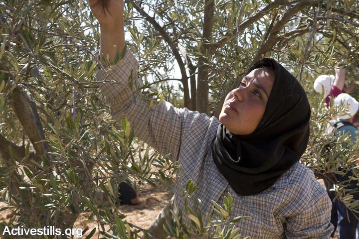 אישה במסיק בכפר סוסיא, 2007 (קרן מנור / אקטיבסטילס)