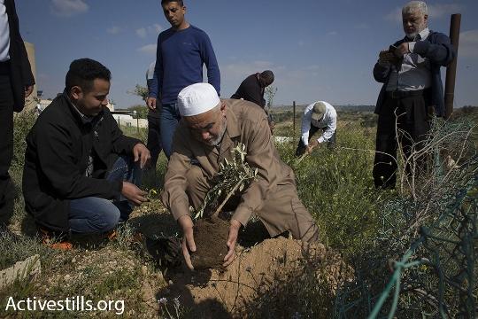 השייח' ראאד סלאח נוטע עץ, יום האדמה באום אל-חיראן (אורן זיו / אקטיבסטילס)