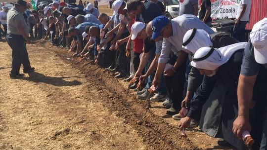 ברית אדמה במקום ברית דם: פלסטינים מכל הארץ מוהלים את אדמתם באדמת הנגב לאות הזדהות. (צילום: דוברות הרשימה המשותפת)
