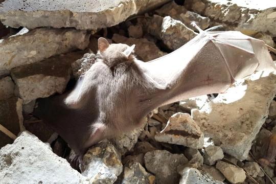 אחד מפצועי טבח העטלפים בחדרה (צילום: עמותת עטלף)