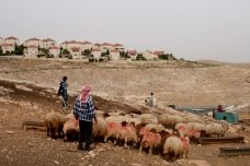 בנייה פלסטינית לטובת פינוי פלסטינים מאזור ההתנחלות. איש משבט הג'האלין רועה למרגלות מעלה אדומים (יניב נדב / פלאש90)