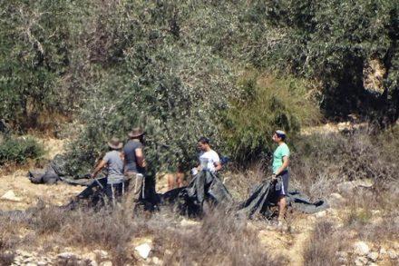 שני אזרחים ישראלים עוכבו סמוך למאחז זית רענן, לאחר שהוזעקה למקום על ידי תושבי הכפר אל-ג'אנייה, שהבחינו באלמונים גונבים זיתים מעצים שבאדמותיהם. (צילום: יש דין)