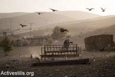 """מאות פלסטינים בבקעה עומדים בפני גירוש: """"רק רוצים לחיות"""""""