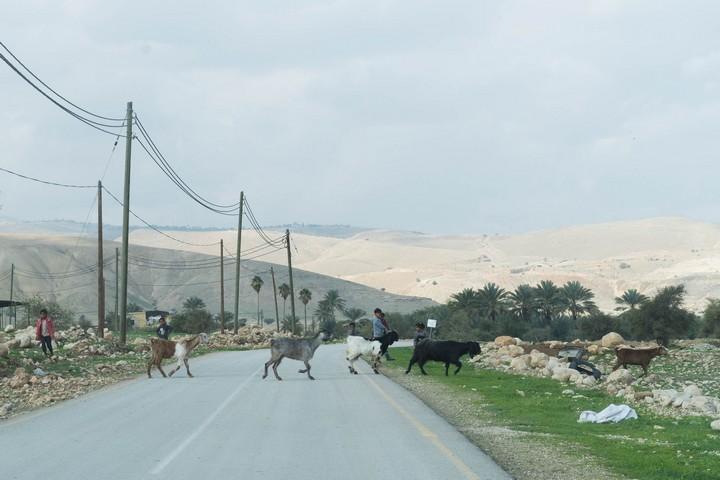 אם כבר כיבוש, שיהיה עם זכויות. הכביש המפריד בין פסאיל לתומר (צילום: רחל שור)
