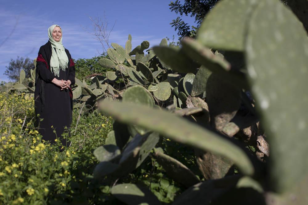 הידיים נפצעו מסחיבת ארגזי עגבניות. ח״כ לעתיד אימאן חטיב מהרשימה המשותפת, בשטח חקלאי של משפחתה ליד עראבה (צילום: אורן זיו)