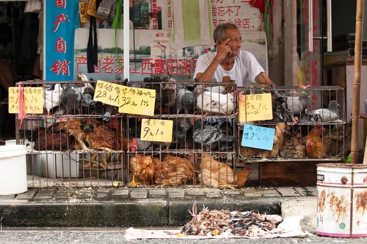שוק רטוב בשנגחאי (צילום: whiz-ka, CC BY 2.0)
