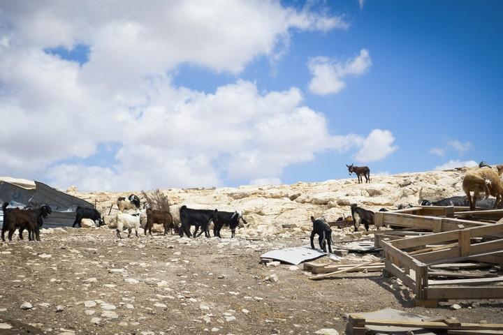 הריסות באבו ר'אליה (צילום: רחל שור)