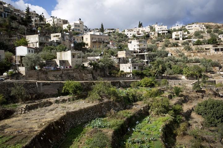 התרבות החקלאית הפלסטינית נהרסת. מבט כללי על הכפר בתיר (צילום: אורן זיו / אקטיבסטילס)