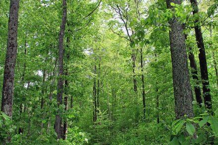 """יער בארה""""ב (צילום: משרד החקלאות האמריקאי)"""