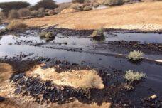 הסכמי הנורמליזציה עם מדינות ערב יגבירו את הרס הסביבה