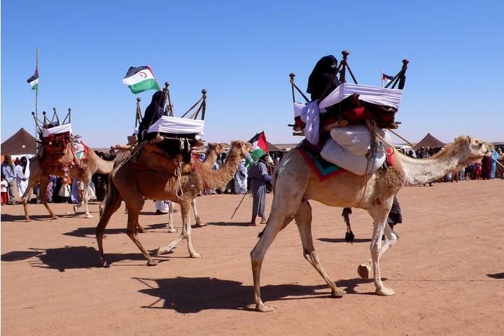 אירוע במחנה של פליטים מסהרה המערבית בטינדוף (ויקימדיה CC BY-SA 2.0)