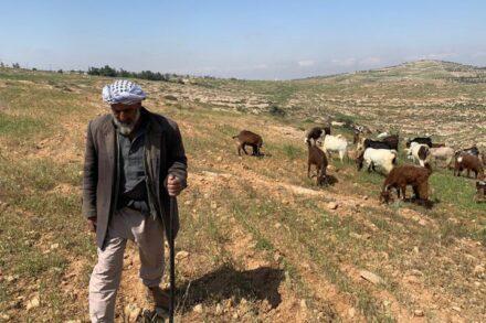 """""""לכם מותר להקים וילה בתל אביב, ולי אסור לגור במקום היחיד שאני יכול"""". מוחמד חמאמדה באדמות שלו (צילום: באסל אל-עדרה)"""
