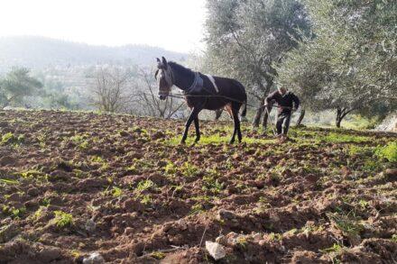 האדמות החקלאיות של וואלג'ה (צילום: דהרמה מעורבת חברתית)