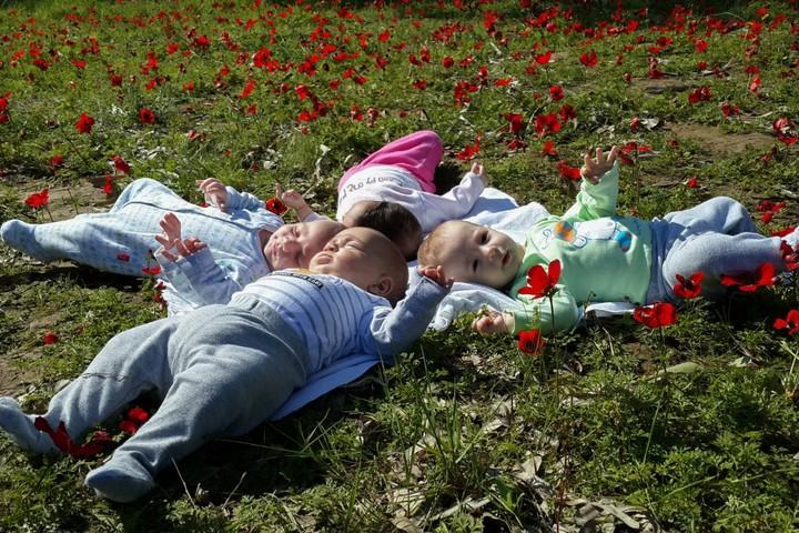 ישראל מובילה בפער גדול על העולם המערבי בשיעור הילודה. תינוקות בשדה כלניות (צילום: גרשון אלינסון / פלאש 90)