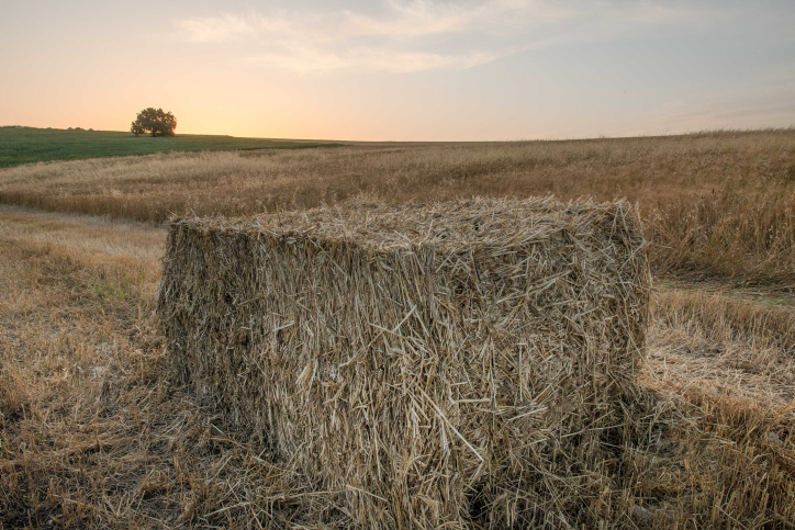 עוברים לשימושים חדשים בקרקע. ערימת חציר בקיבוץ בצפון (צילום: מילה אביב / פלאש 90)