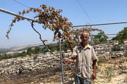 הגיש תלונה נגד הפגיעה בעצים שלו. עזיז ג'עאפרה מהכפר אל-טייבה ליד חברון (צילום: באסל אל עודרה)