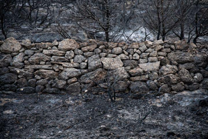 נוף אינו רק תוואי קרקע, הוא חלק בלתי ניתק מהזהות. שריד של טראסה מכפר סאריס (צילום: מתן גולן)