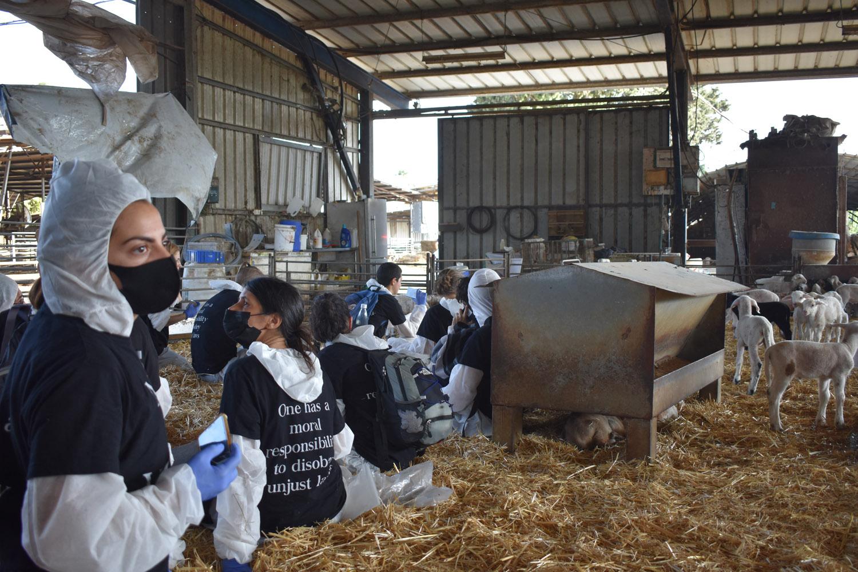 מחאה של פעילי זכויות בעלי חיים במשק במושב רשפון (צילום: Meat the victims)