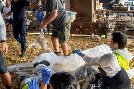 מחאה של פעילי זכויות בעלי חיים במשק במושב רשפון (צילום: ברק מאייר)